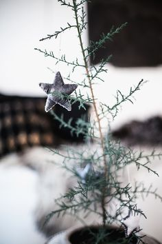 my scandinavian home: Christmas decorations Tiny Christmas Trees, Noel Christmas, Scandinavian Christmas, Little Christmas, Country Christmas, Xmas Tree, Winter Christmas, Christmas Decorations, Bohemian Christmas