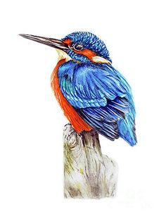 Kingfisher II by Marie Burke