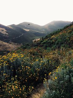 This is ten minutes from my house. It's beautiful.   Montaña De Oro | wild flower