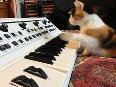 CatSynth pic: Pinto and Moog Little Phatty