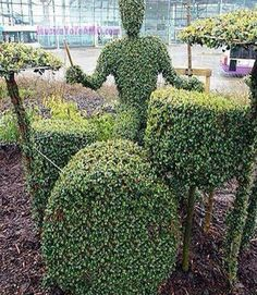 Boxwood sculpture of drummer at the drumkit, complete with literal drum STICKS! #drumming, art, garden decorations