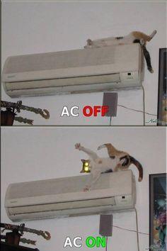 air conditioner cat funny pictures