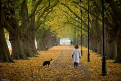 Autumn leaves: A woman walks her dog in Cambridge on a beautiful sunny day for the South E...