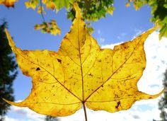 Autumn in Keswick 15-10-12