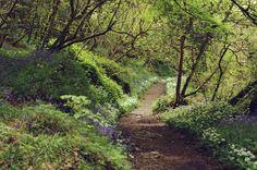 Exploring Daphne du Maurier country, walking the Helford River via Frenchman's Creek