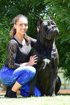 #canecorsos #canecorsoimport #sanroccocanecorso #rothorm #alpha #canecorsostud #canecorsochampion #canecorsodogshow Here is Alpha with his handler in Portugal.