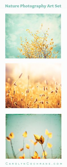 Nature Photography Wall Art Set by Carolyn Cochrane | Yellow Teal Botanical Prints | Mint Turquoise Gold Decor