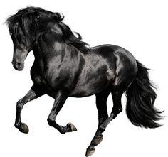 caballos. png - Buscar con Google
