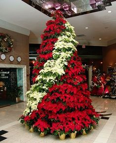 1000 images about decorate with houseplants on pinterest for Poinsettia christmas tree frame