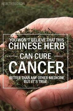 As an answer from nature to this paralyzing issue, a rare Chinese herb with incredible healing properties came into the light. According to the studies which were published in Life Sciences, Cancer Letters and Anticancer Drugs, artemisinin is the miracle herb which is known to kill a whopping 12,000 cancer cells for every healthy cell. Artemisinin is a derivative of the wormwood plant which is popularly used in Chinese medicine. by Andrea Scherer