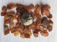 Bernstein & versteinerter Seeigel - unsere Funde vom 9.11.2014 (Skodbjerge)