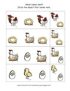 Life Cycle ~ Chicken | Cycling, Free worksheets and Worksheets