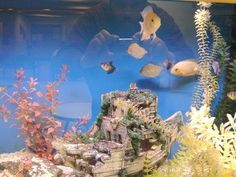 How To Remove Hard Water Stains From Fish Tanks