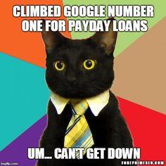 google cat meme ranking