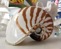 Neptune's Jewels are nature's most exotic sea shells, gathered from all over the world and hand embellished with sparkling crystals in South Carolina. Each shell is unique in its own beauty and texture. Tropical Home Decor, Seaside Decor, Beach Cottage Decor, Tropical Houses, Coastal Decor, Nautilus, Nautical Bedroom Furniture, Cute Cottage, Cottage Ideas