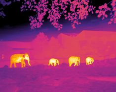 Pairing astronomers' algorithms for star-hunting with drones equipped with infrared cameras, scientists have developed a new tool kit to help conservation and fight poaching.