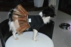Now you can find us on www.chiquitafashiondog.com
