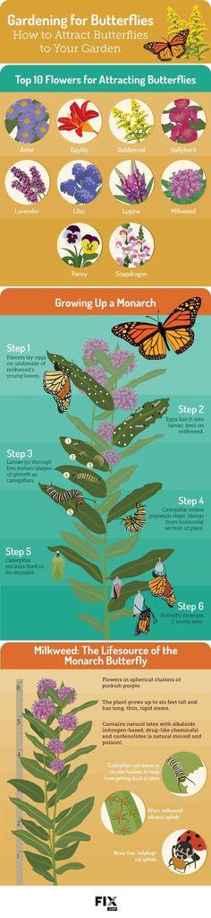 Attracting Butterflies To Your Garden