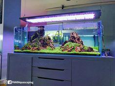 Update of the Iwagumi tank scaped at Ecoarium store in Portugal powered by Aquaflora plants and LUPYLED Diy Aquarium Stand, Aquarium Ideas, Aquascaping, Planted Aquarium, Freshwater Aquarium, Shallow, Fish Tank, Fresh Water, Portugal