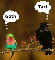 when birds talk smack