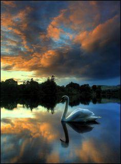 A swany sunset - Spittalfield, Scotland