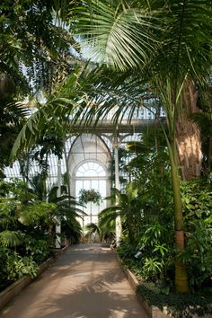 Enjoy palms, cycads and climbers, all within the steamy Palm House at Kew