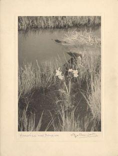 Zofia Chomętowska Calendule a Bobrykiem Flora, Tapestry, Classic, Nature, Photography, Painting, Poland, Inspiration, Vintage