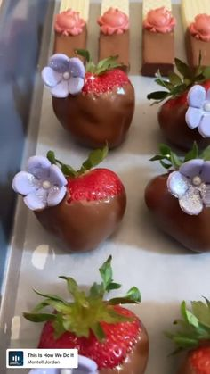 Strawberry Desserts, Chocolate Covered Strawberries, Mini Desserts, Summer Desserts, No Bake Desserts, Dessert Recipes, Chocolate Covered Treats, Chocolate Dipped, Chocolate Cupcakes