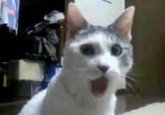 Cuando la persona que te gusta marca tu tweet como favorito… | 21 GIFs con reacciones perfectas para cada ocasión