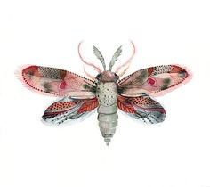 Moth Fuschia Red Pink and Blue  by amber alexander