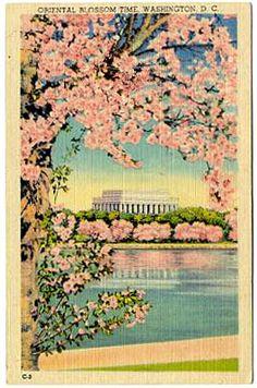 Vintage Washington, DC postcard with Cherry Blossom Festival image