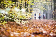 Met je eigen paard of huren, mooie routes in het NP 't Dwingelderveld,  door bossen/ heide/ vennen. Railroad Tracks, Train Tracks