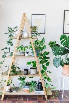Amazing House Plants Indoor Decor Ideas Must 27 Wood Projects For Beginners, Diy Wood Projects, Outdoor Shelves, Interior Design Plants, Interior Designing, Home Interior, Mug Design, Plant Aesthetic, Plant Guide
