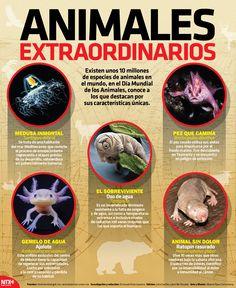 En la #InfografíaNTX te presentamos 5 animales extraordinarios. Te invitamos a leerla y que nos cuentes si conoces algún otro.