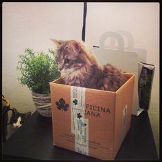 Da oggi siamo anche su instagram! I nostri prodotti piacciono anche ai nostri gatti!! :D http://instagram.com/biofficinatoscana