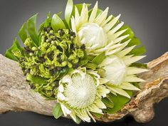 Wild Lotus Florist Northern Beaches | Newport | Bilgola | Bilgola Plateau | Balgowlah | Clontarf | Fairlight | Manly | Seaforth | Collaroy | Curl Curl | Dee Why | Allambie | Beacon Hill | Belrose | Brookvale | Collaroy | Cromer | Freshwater | Killarney Heights | Manly Vale | Narrabeen | Balgowlah | Queenscliff | Avalon | Bayview | Church Point | Clareville | Elanora | Ingleside | North Narrabeen | Mona Vale | Palm Beach | Warriewood | Whale Beach | Mothers Day Flowers | Wedding Flowers