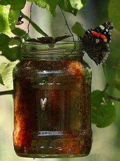 Ohjeet perhosbaariin