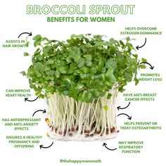 Broccoli Sprouts Benefits, Alfalfa Sprouts Benefits, Broccoli Health Benefits, Growing Microgreens, Broccoli Sprouts Growing, Estrogen Dominance, Sprouting Seeds, Sprout Recipes, Healthy Juices