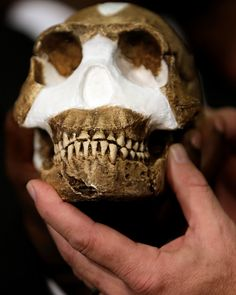 """Our family tree just got bigger. And I don't mean a long-lost uncle. I'm talking a new SPECIES of our prehistoric human lineage. Hailing from the Rising Star Cave in South Africa, meet our new ancestor, Homo naledi. Lee R. Berger, an American paleoanthropologist & professor of human evolution studies at the University of the Witwatersrand in Johannesburg. The species name, H. naledi, refers to the cave where the bones were discovered; """"naledi"""" means """"star"""" in the local Sesotho language."""