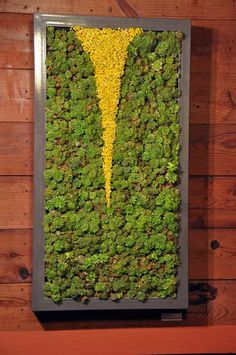 """fissure   2010   39""""x21""""   powder-coated steel, succulents, dried flowers"""