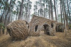 Sweetgum thicket sweet gum thicket durham, nc built by stickworks Patrick Dougherty at the museum of life and science