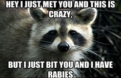 Can These Hilarious Animal Memes Make You Laugh?   PlayBuzz