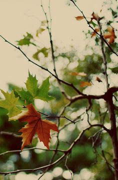 Ah, the start of Autumn, it makes my lips curl into a bigger grin with each leaf that changes...