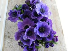 Purple anemones: November through May  $$$