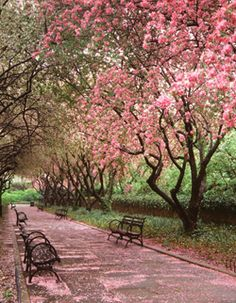 spring time in central park. new york.