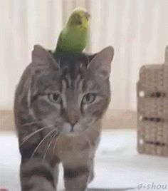 Paseando al animal ?!