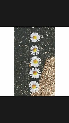 Wall paper vintage hipster photography indie 19 ideas for 2019 Hipster Photography, Beach Photography, Vintage Photography, Amazing Photography, Nature Photography, Photography Flowers, Travel Photography, Fashion Photography, Tumblr Hipster