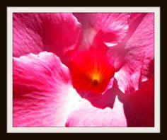 Tropical - Jon Lander - copyright 2014 - flowers, nature photography