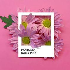 Serie PANTONE Floral