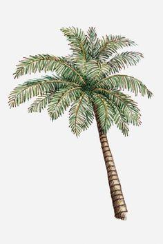 Illustration libre de droits: Illustration of a palm tree
